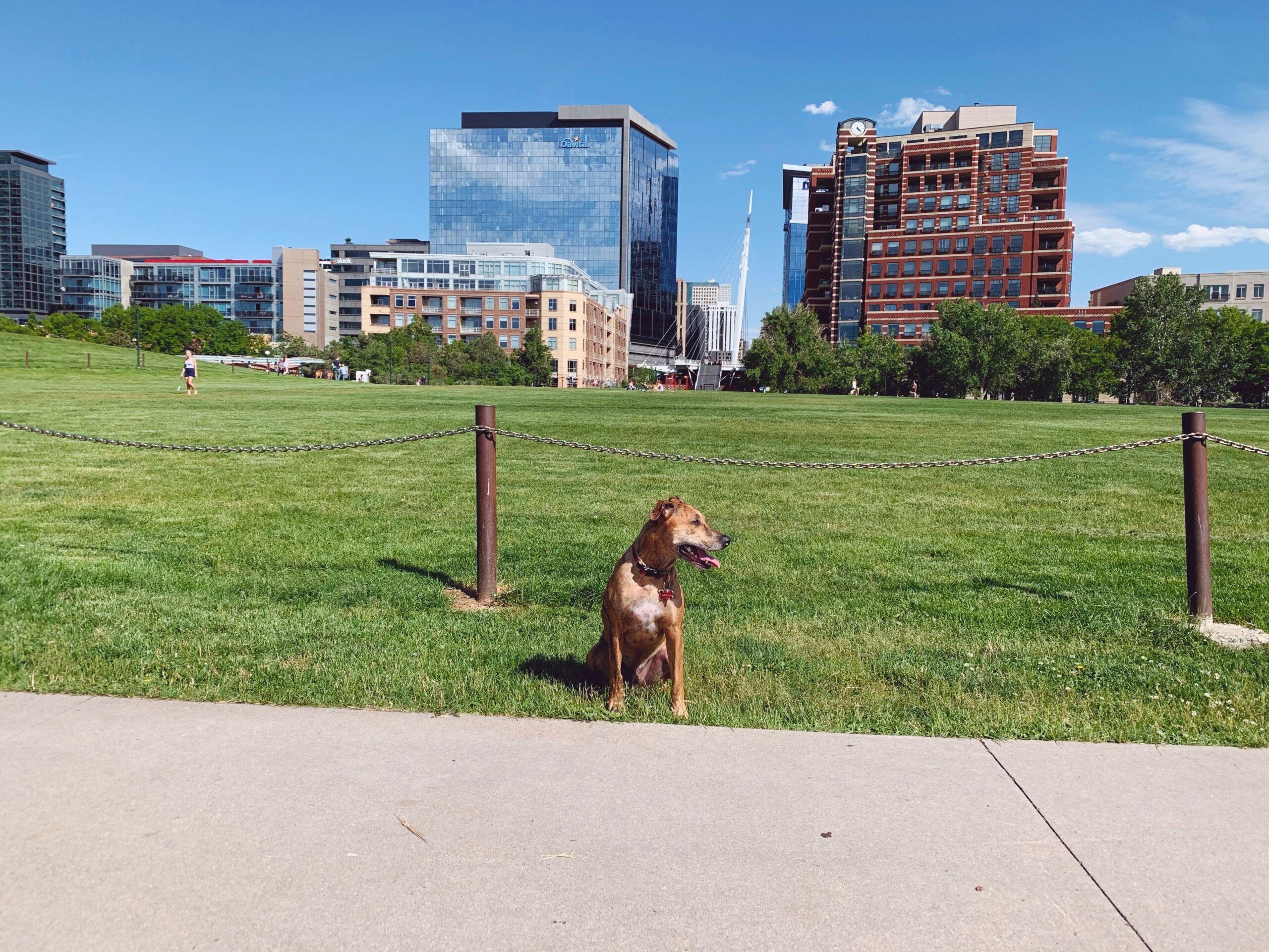 Dog at Confluence Park in Denver, Colorado